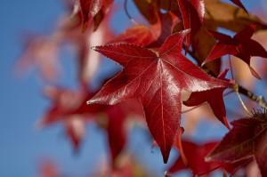 Yeah, California has autumn leaves too